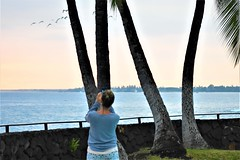 Egrets fly over (thomasgorman1) Tags: photography nikon woman resort shore birds flock egrets nature wildlife flying island hawaii trees palmtrees wall seawall grass