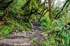 Enchanted Woods (sakthi vinodhini) Tags: settlement annapurna nepal himalayas abc trek backpack mountains hills greenery ngc forest landscape mountain tree dark deep bamboo wet rainy grass rock wood creek hdr