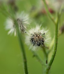 Macro (the_cyberspace) Tags: macro bloemen macrofotografie hackfort natuur vorden gelderland