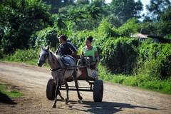 Local taxi (leewoods106) Tags: cuba holguin caribbean cart horse green rural people person woman man vegitation trees mud