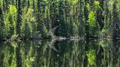 'Spring's Palette' (Canadapt) Tags: shoreline reflection trees forest green spring keefer canadapt