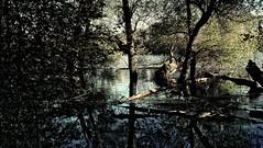 Urwald am Oberrhein (MHikeBike) Tags: farbig wege himmel deutschland badenwürttemberg baden karlsruhe park see bäume wald herbst autumn forest trees lake bathe badenwurttemberg germany lock sky coloured