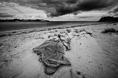 Pen Bron (dnobiliasaphus) Tags: penbron laturballe bretagne loireatlantique dune