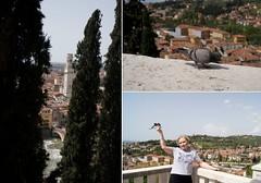 Verona synopsis (Insher) Tags: italy verona pigeon adige castelsanpietro