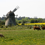 Three armed windmill thumbnail