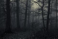 In darker Times (Netsrak) Tags: baum bäume eifel europa europe herbst landschaft natur nebel wald autumn fall fog landscape mist nature woods