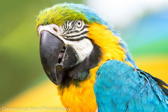 Glamor Shot (nywheels) Tags: parrot macaw bird bokeh nature aramacao newpaltzpride