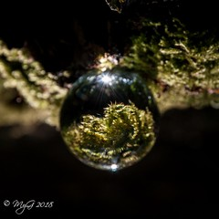 Inverted moss (Mike Y. Gyver ( OFF a few days !!! )) Tags: mygphotographiewixsitecommyg2017 2018 glassball glass moss green lowkey zen upsidedown dof depthoffield closeup d90