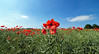 Poppy field. (S.K.1963) Tags: elements poppy field poppies sky cloud trees mosborough england landscape olympus omd em1 mkii 7 14mm 28 pro
