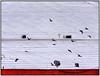 IMG_1952_edit (cnajhar) Tags: pombas pigeons birdsinflight birds aves