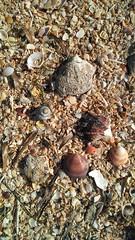 IMG_20180310_151141_614 (reinh_3008) Tags: tunisia tunesien tunesia beach impression traces human environment nature