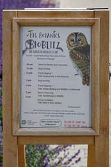 Edinburgh Botanic Gardens BioBlitz 2018 -29 (Philip Gillespie) Tags: • edinburgh royal botanic gardens 2018 big bioblitz bio blitz kids children men women man woman people fun faces smiles water wet insects bugs moths spiders legs arms eyes hats grass trees bushes plants short pool sun sky pond lilly wings park nature colour green blue red yellow orange purple science teach record check house cottage photo photography canon 5dsr rbgenature thebotanics dipping worms birds bigbotanicsbioblitz