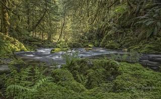 Goldstream Provincial Park, Vancouver Island