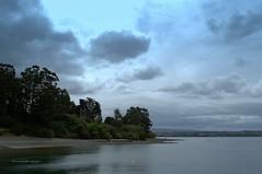 Paisaje de Chiloé. (luisarmandooyarzun) Tags: bosque vegetación árbol agua océano mar nubosidad sky clouds nubes atardecer sunset paisaje turismo fotografía landscape photography chiloé chile