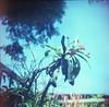 a beautiful day in the neighborhood (tamara noland) Tags: kodakpmz1000 120 120film analogue filmphotography square squareformat bluesky flowers likeahalinga1 starlitetlr starlite