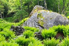 Massi e Muretti (Roveclimb) Tags: montagna mountain alps alpi muncech escursionismo hiking trekking casenda paiedo berlinghera zania forcelladellazania valmilano altolario valchiavenna sorico felce fern felci ferns forest foresta wood bosco nature natura
