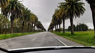 Palmeras - Palm-trees