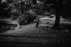 Park Wilsona. (pearljamledzeppelin) Tags: bw monochrome blackandwhite bwphotography streetphotography street park kid boy pigeons movment canon