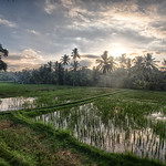 Morning in the rice fields of Ubud, Bali. thumbnail