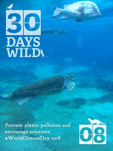 30 Days Wild - 08 - World Oceans Day