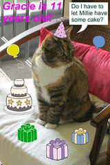 Gracie's 11th Birthday 9403 (edgarandron - Busy!) Tags: gracie patchedtabby cat cats kitty kitties tabby tabbies cute feline birthday