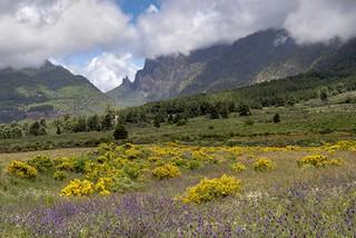 *Flowering season on La Palma*