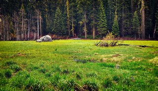 Crescent Meadows and a Backdrop of Redwoods and Evergreen Trees (Sequoia National Park)