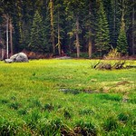 Crescent Meadows and a Backdrop of Redwoods and Evergreen Trees (Sequoia National Park) thumbnail