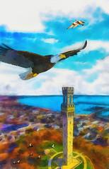 dreams of soaring (Bill Sargent) Tags: eagle soar flying capecod pilgrim monument provincetown summer massachusetts