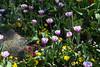 Tulips (aleks_ca) Tags: tulips flowers brussels bruselas bru flores belgium belgica belgique nature spring