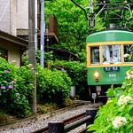 Enoshima Electric Railway 300 Type Train at the Goryo-jinja Shrine ; 江ノ島電鉄300形電車(鎌倉御霊神社) thumbnail