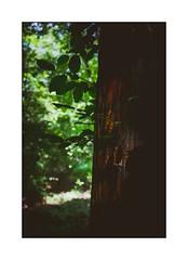 La marque (SiouXie's) Tags: couleur color fujixe2 fuji fujifilm 1855 siouxies nature arbre tree