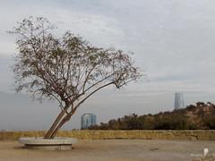 Cerro los Gemelos (0_miradas_0) Tags: cerro los gemelos parque metropolitano mirador torre edificio rascacielos arquitectura muro piedra árbol naturaleza cielo nube ciudad santiago chile