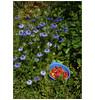 Jardin de juin (afantelin) Tags: yonne bourgogne burgundy nigelle fraises rouge red bleu blue
