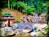 Toi Waterfall 86, 71600 Kuala Klawang, Negeri Sembilan 013-670 2168 https://goo.gl/maps/XRa7fzpSE1H2  #travel #holiday #trip #traveling #旅行 #度假 #亞洲 #Asian #Malaysia #馬來西亞  #여행 #ホリデー #휴일 # #праздник #путешествие #วันหยุด #การเดินทาง #Waterfall #瀑布 #น้ำตก (soonlung81) Tags: trip 滝 วันหยุด น้ำตก 度假 瀑布 traveling путешествие malaysia ホリデー 폭포 휴일 馬來西亞 водопад การเดินทาง праздник holiday airterjun 旅行 jeramtoi travelmalaysia 여행 亞洲 waterfall travel asian