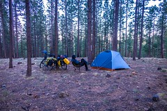 Camping in the forest just felt like home at Jacob Lake in Northern Arizona