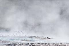 smoking hot (trying to catch up again !!!) Tags: iceland travel kjölur hveravellir smoke smoky hot hotspot vulcanic ivodedecker ísland water nature