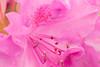 Flower in Macro (f1crazed) Tags: macro flowers f1crazed