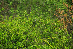 VERDE (Zayra Vanessa) Tags: verde arbol naturaleza