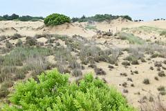 Jockey's Ridge 2 (meg21210) Tags: dune dunes grass grasses people visitors nc northcarolina obx outerbanks sand preserve preservation jockeysridge jockeysridgestatepark trees