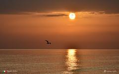 RIFLESSI ALL' ALBA. (Salvatore Lo Faro) Tags: natura nature alba mattino mare sole cielo gabbiano uccello riflessi dorati nuvole volo rodi pulglia gargano italia italy salvatore lofaro nikon 7200