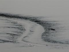 tidal channel (achatphoenix) Tags: mudflat mud water wasser waddensea wattenmeer waterscape watt patterns tidal lowtide lowersaxony eastfrisia rheiderland ostfriesland aqua