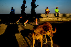 Sitting and Running with Dog-DSC_6969 (thomschphotography3) Tags: running runners dog shadow light mumbai india asia people streetphotography men women