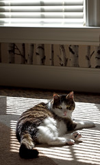 I'm not Butterscotch and I was napping! (WilliamND4) Tags: caturday happycaturday cat light window nap sunbathing cute