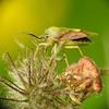 Mimicry (eerokiuru) Tags: mimicry insect p900 nikoncoolpixp900 raynoxdcr250