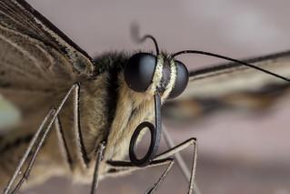 Attractive Barfly, pt. 3 - _TNY_3814