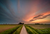 Going Home (Ellen van den Doel) Tags: 2018 natuur netherlands sunset nature mei nederland outdoor evening clouds goeree road lucht zonsondergang weg sky landschap overflakkee landscape wolken field