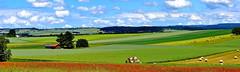 Que la campagne est belle (Diegojack) Tags: d7200 vaud suisse colombier romanel aclens paysages campagne panorama assemblage coquelicots bigoudis groupenuagesetciel fabuleuse