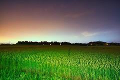 IMG_3877 (Desmojosh) Tags: long exposure new jersey mount laurel nj canon 70d sigma 1020mm night field wheat color