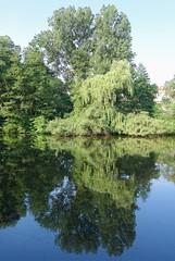 - (txmx 2) Tags: water tree reflection eppendorfermühlenteich hamburg